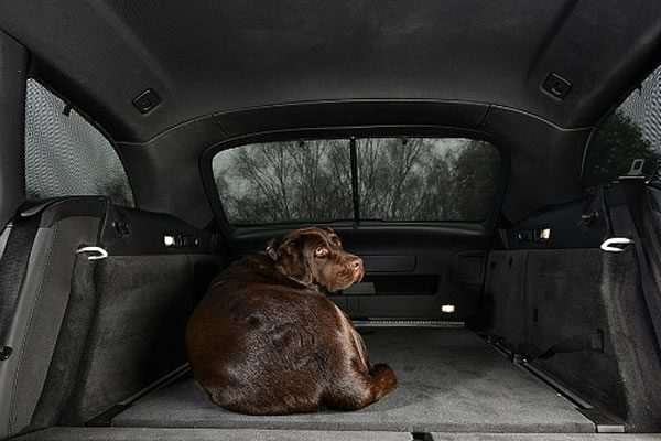 Perro en sombra